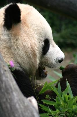 Googles Panda kommt näher