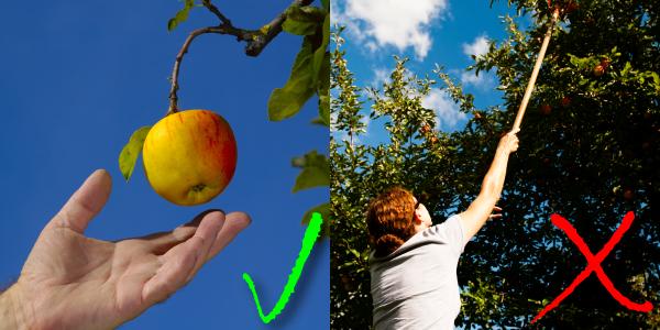 Die low hanging fruits im SEO