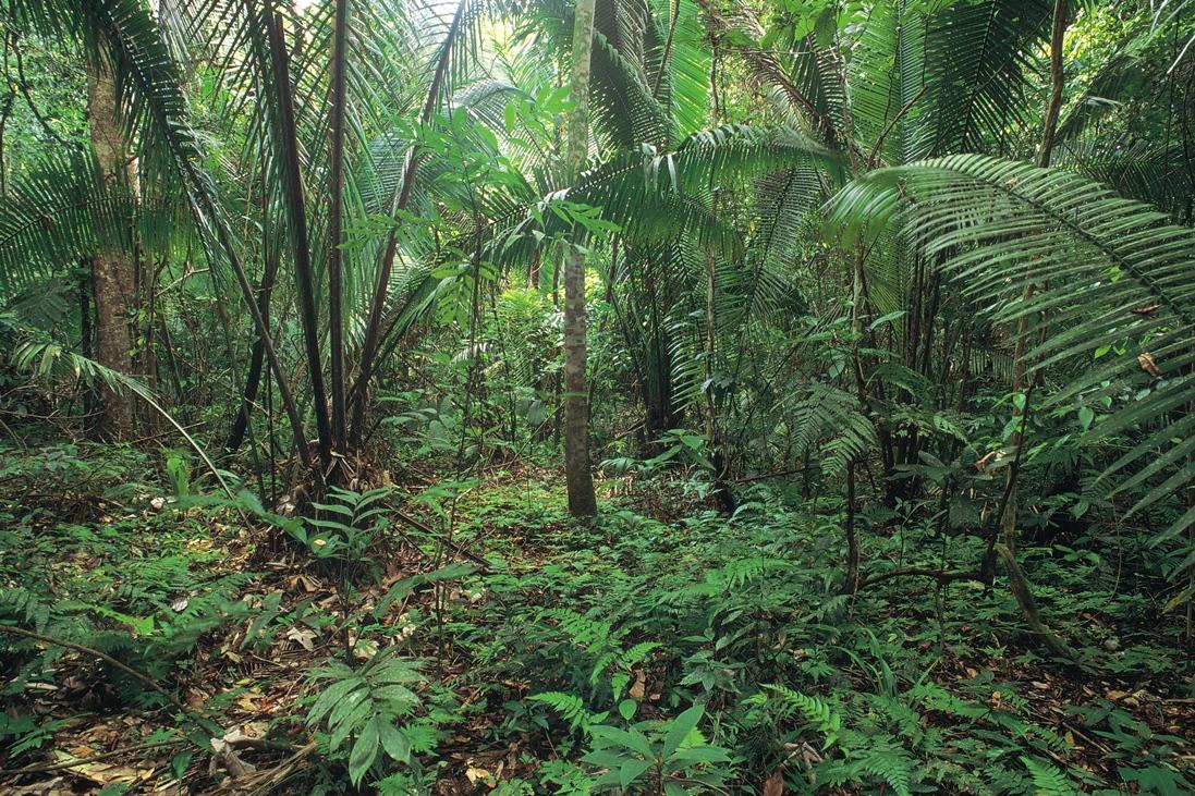 Rainforest in Cockscomb Basin in Belize
