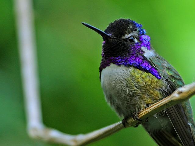 Der Kolibri - Namensgeber für das Google Hummingbird Update