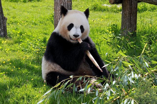 Der Panda - bei Google sorgt er für qualitative Suchergebnisse