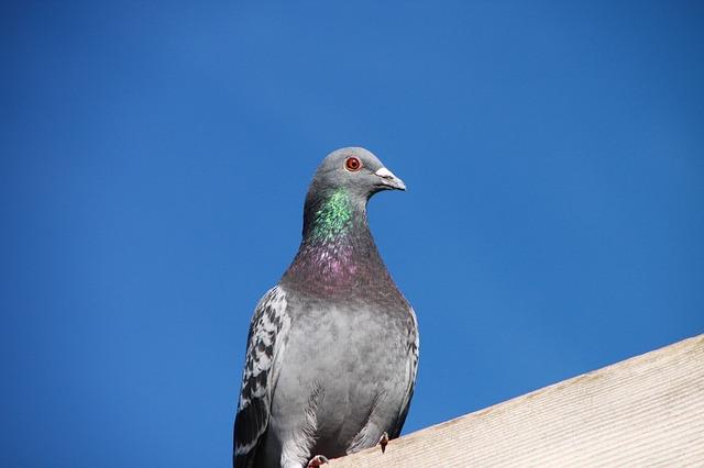 Das Pigeon Update verbessert die lokalen Suchergebnisse