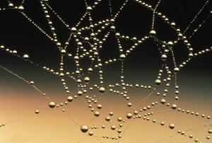 Der Crawler hangelt sich wie eine Spinne durch das Netz