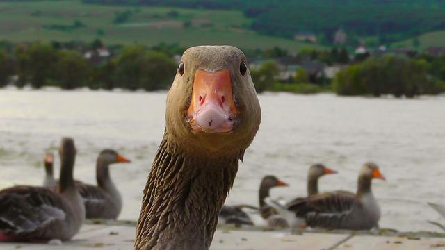 DuckDuckGo ändert Suchalgorithmus