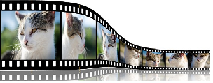 Video Beispiel Katze