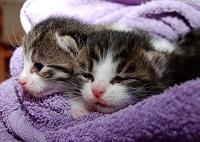 We love Cat Content