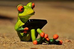 Frosch mit Laptop